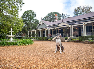 A Great Dane sits in front of a grand homestead with a fountain as part of a styled pet photoshoot