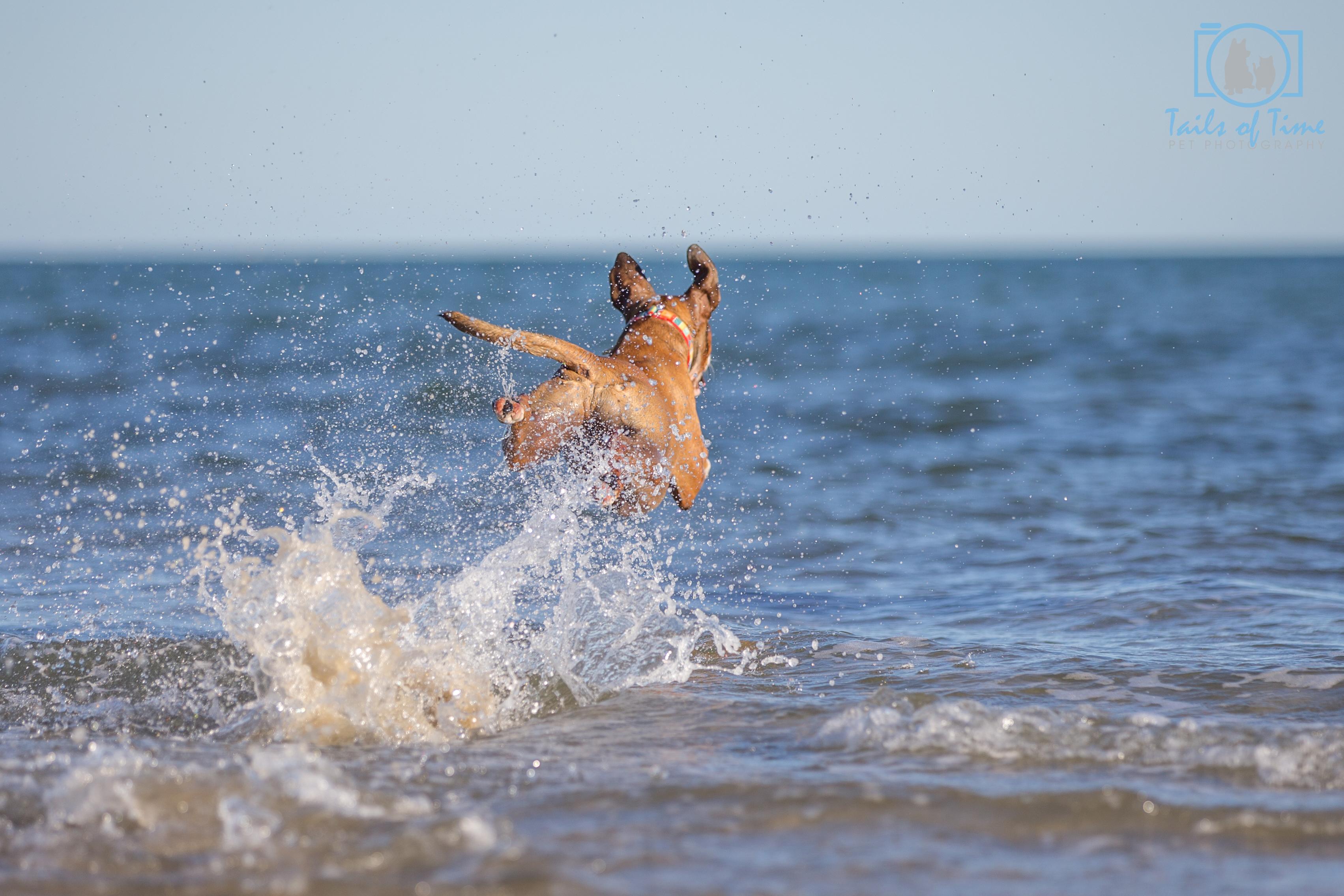 sunshine coast pet photos