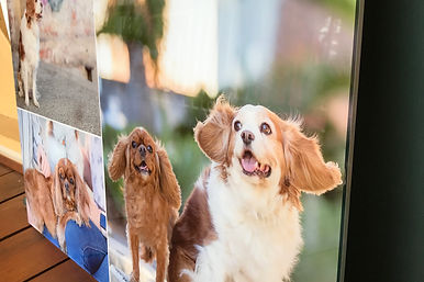 acrylic artwork pet photography