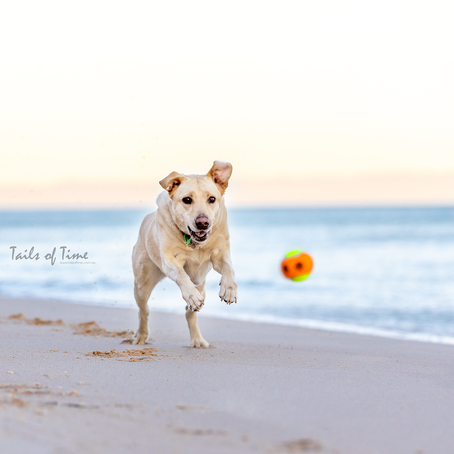 How to choose a location for your Pet Photography Session