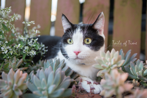 Cat Photographer Brisbane. A session at home by Tails of Time Pet Photography