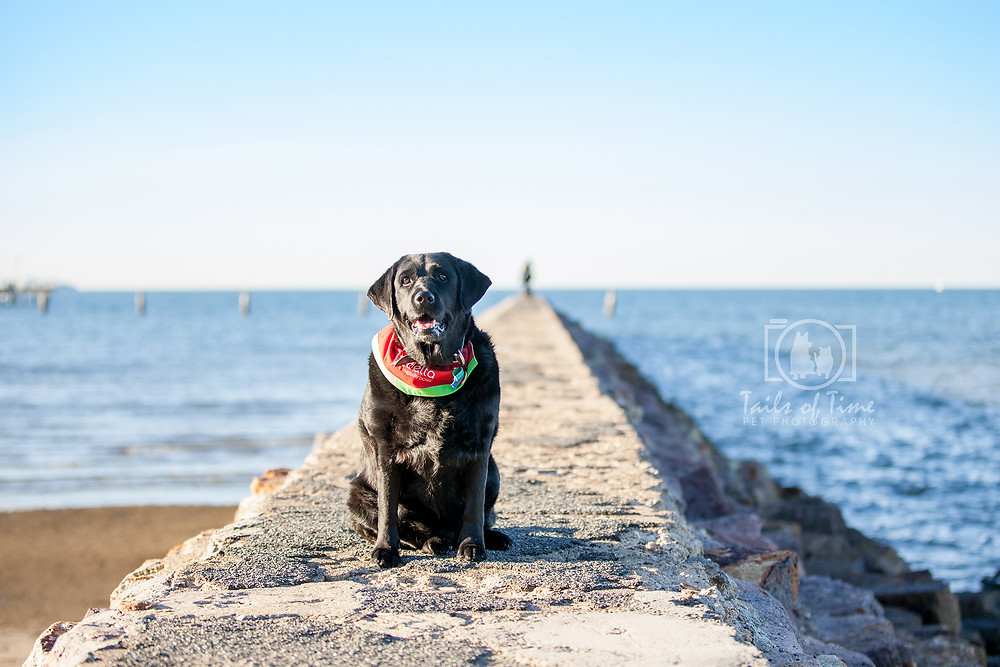 Get beautiful photos of your dog by Tails of Time Pet Photography