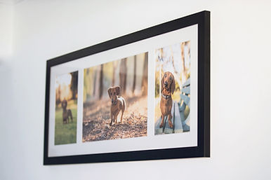 brisbanepet photography photo frame options