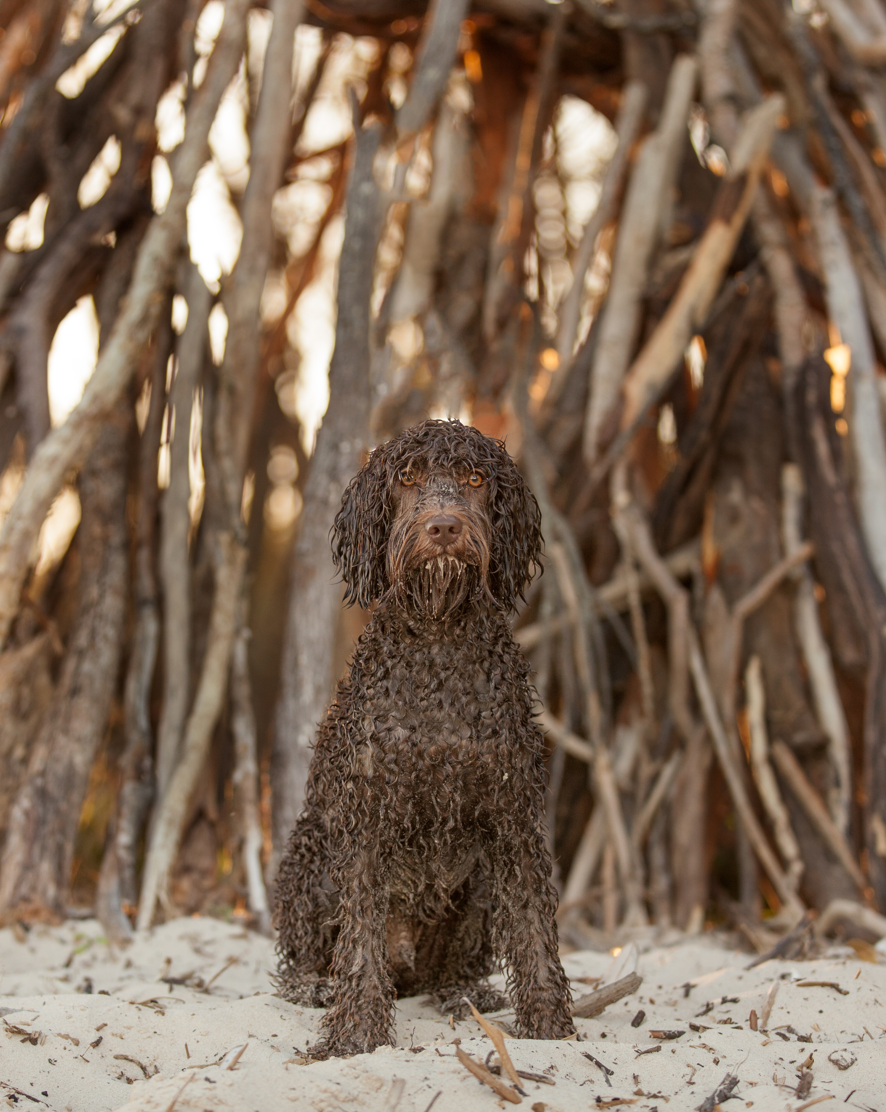beach dog photography brisbane