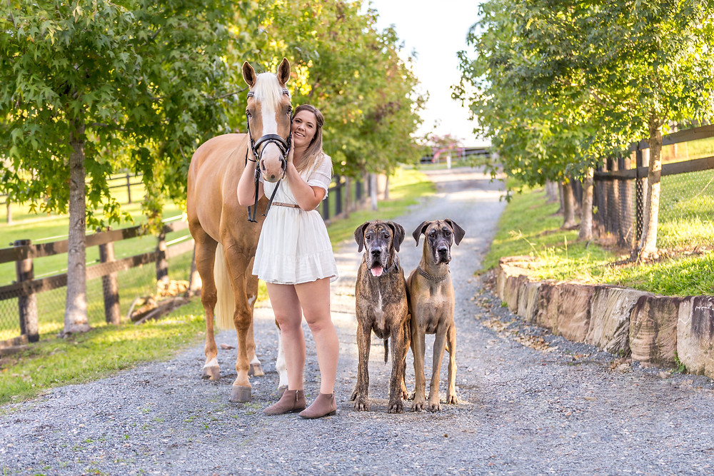 A girl and her horse and 2 great danes posing for a photo