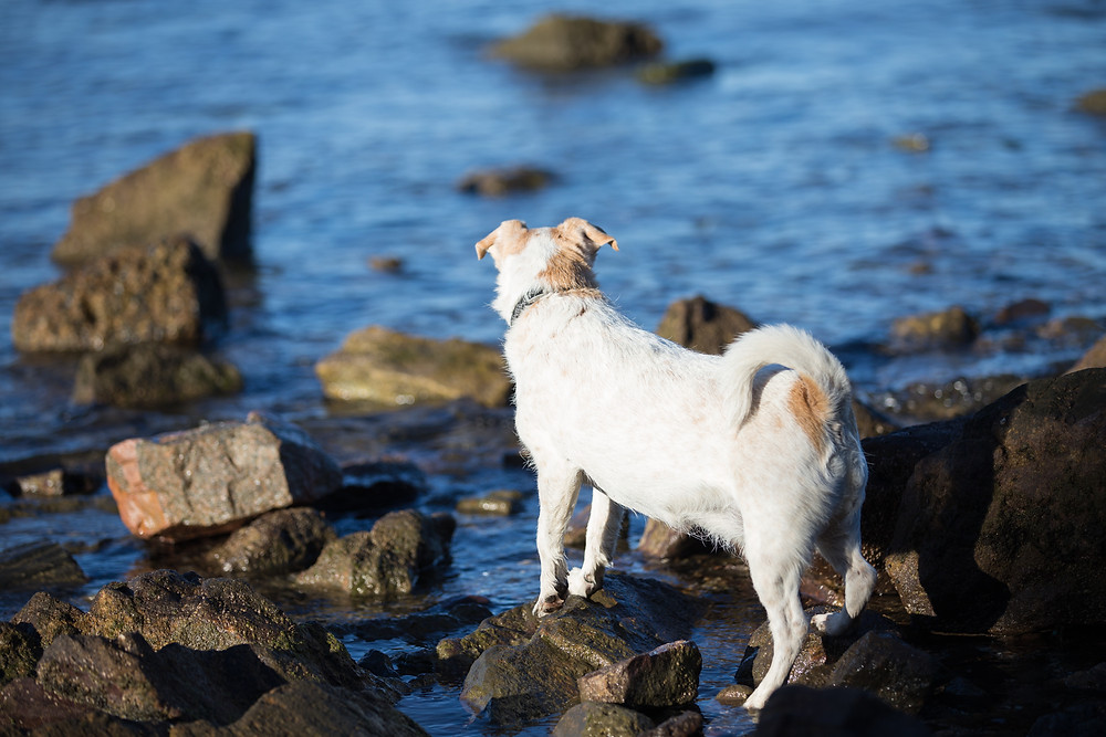 Get photos of your dog at the beach in Brisbane