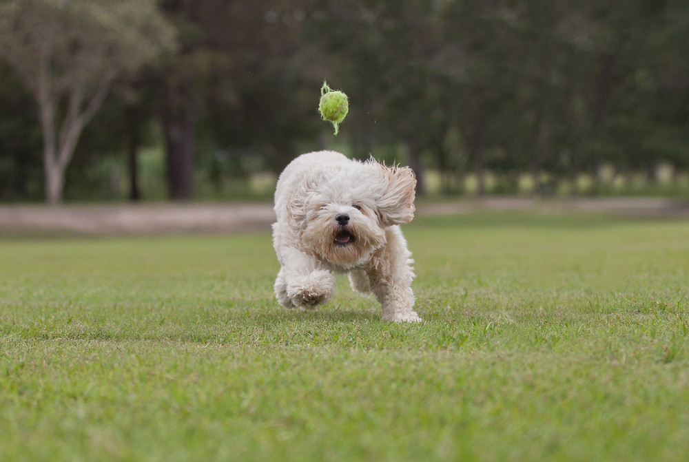 Action shot by Tails of Time Pet Photography