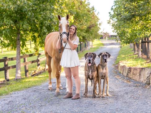 greatdane-palomino-equine-petphotography