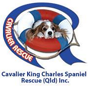 The logo for Cavalier King Charles Spaniel Rescue Queensland. One of th partners for the pet photography project