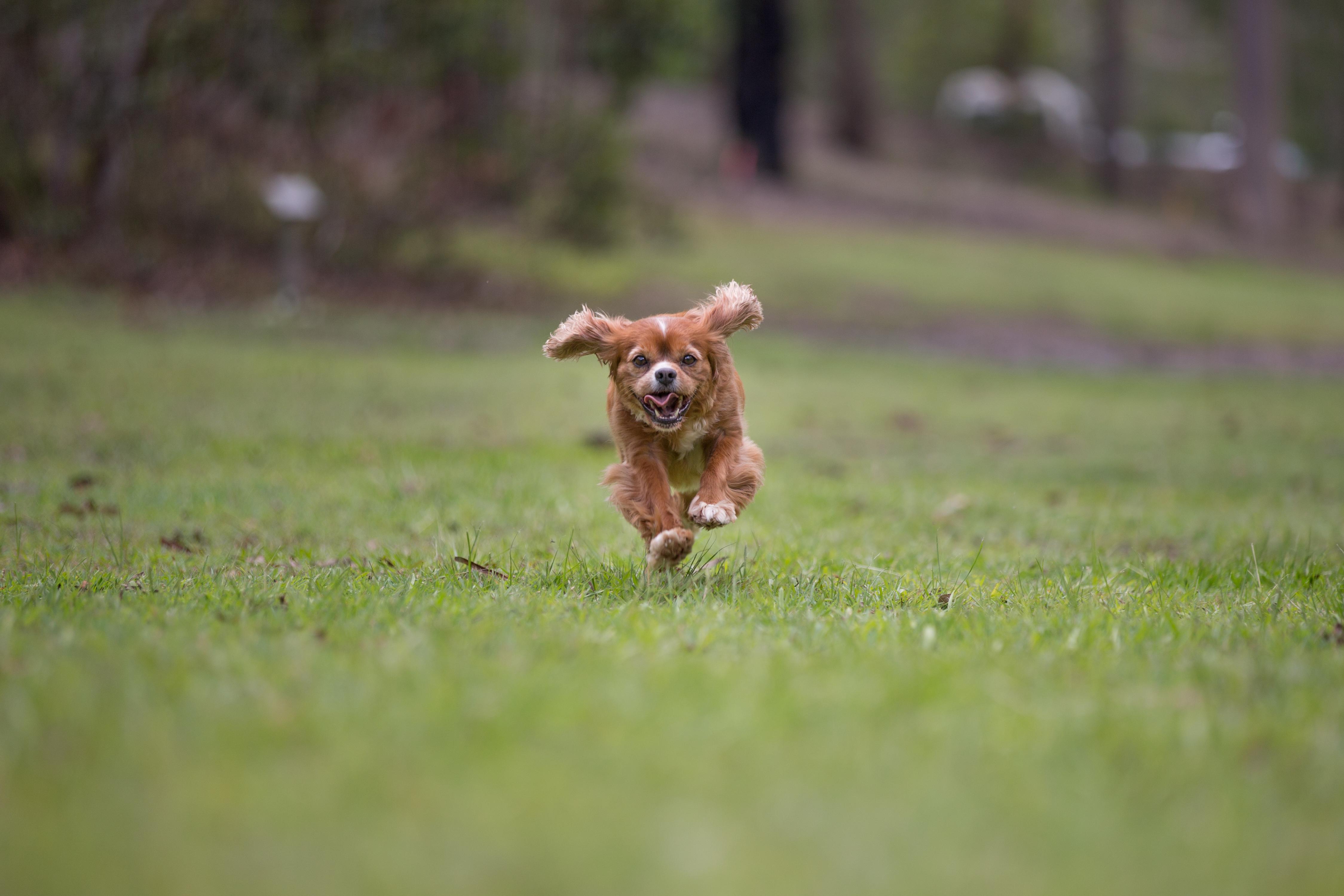 brisbane dog running photos