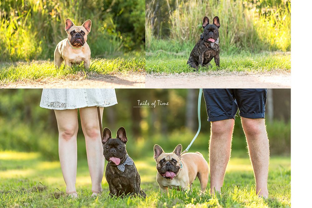 5 Things Pet Parents should Prepare Before your Photoshoot with Tails of Time. A plain collar! Check out Frank and Sage rocking their new collars.