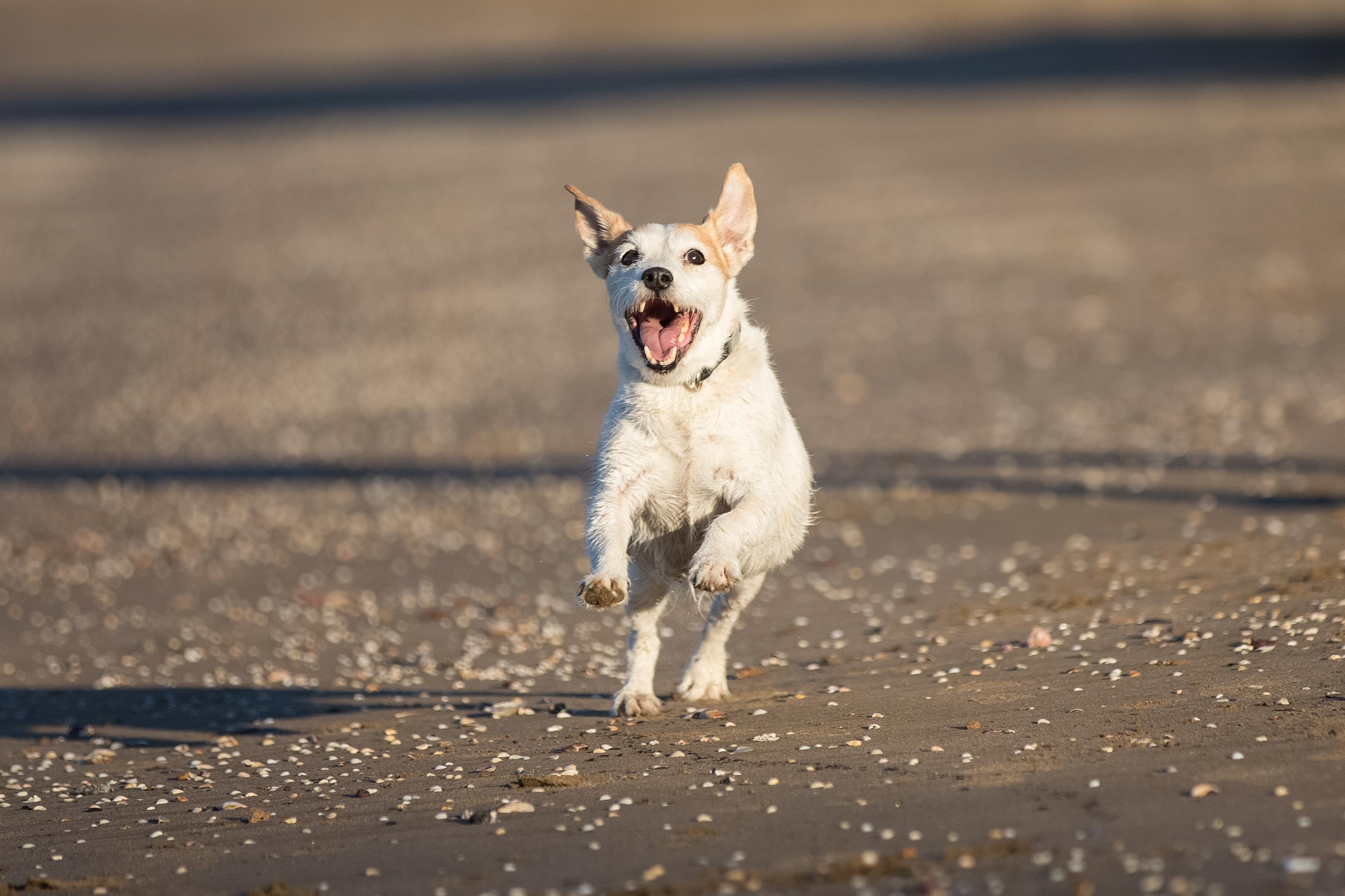 beach shoot pet photography