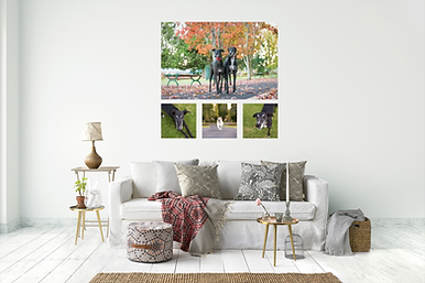 canvas artwork pet photography