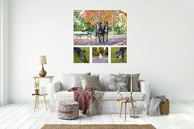 A room showing the final artwork from their pet photography session