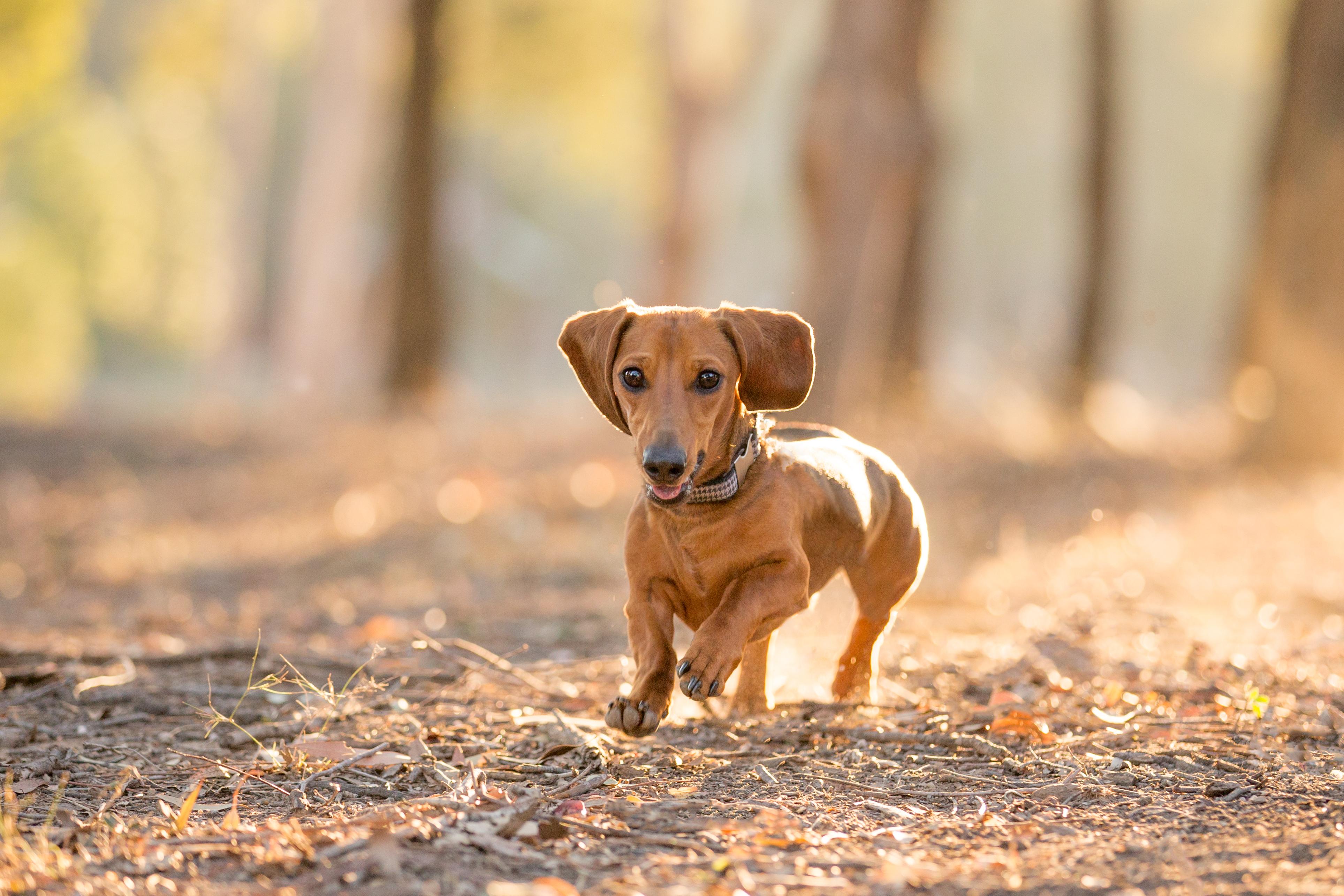 chermside dog photo studio