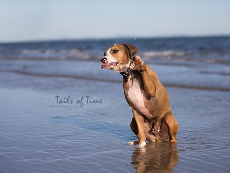 Amos the beach babe | Bribie Island