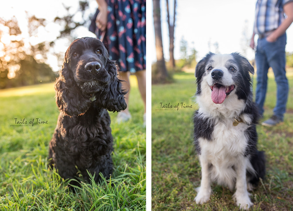 Best Dog photographer in Brisbane