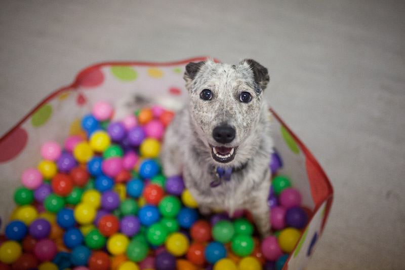 paddington dog daycare Brisbane