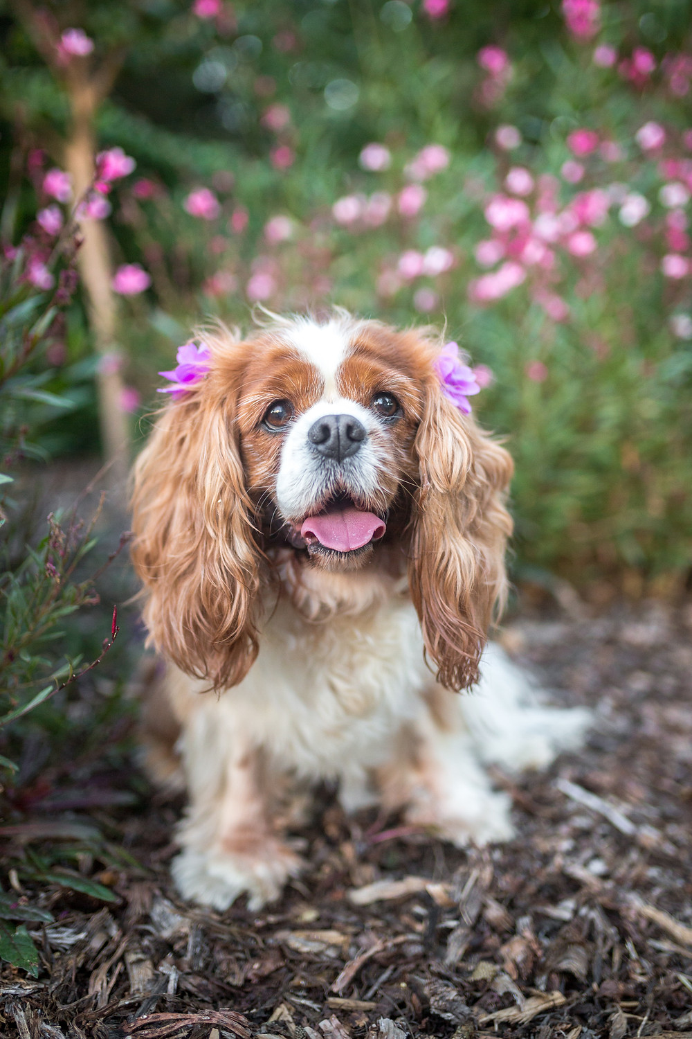 Toowoomba pet photography Queens Park
