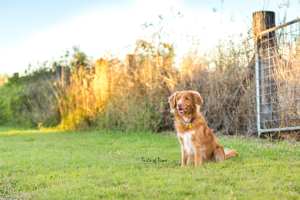 A Brisbane country-style photoshoot for families and pets.