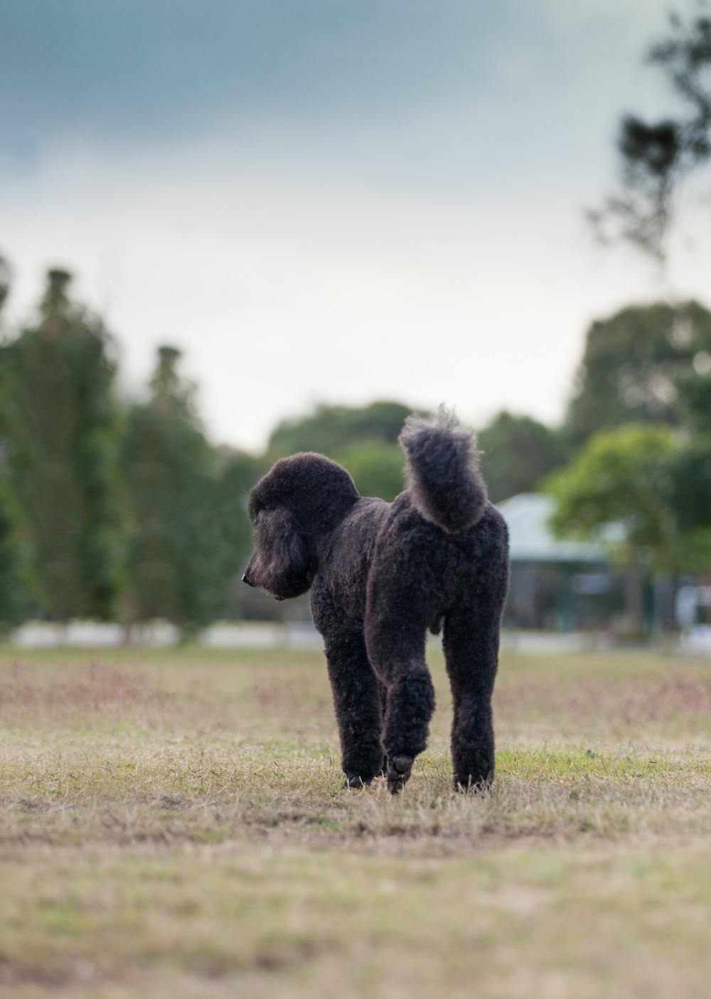 Brisbane dog Photographer Northside