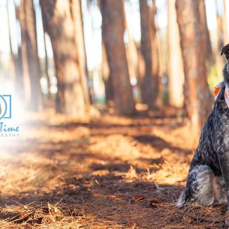 Felix | Gold Coast Pet Photography Session