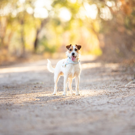 Travel Session // Cecil in Stanthorpe