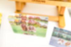 brisbane pet photography studio product choices
