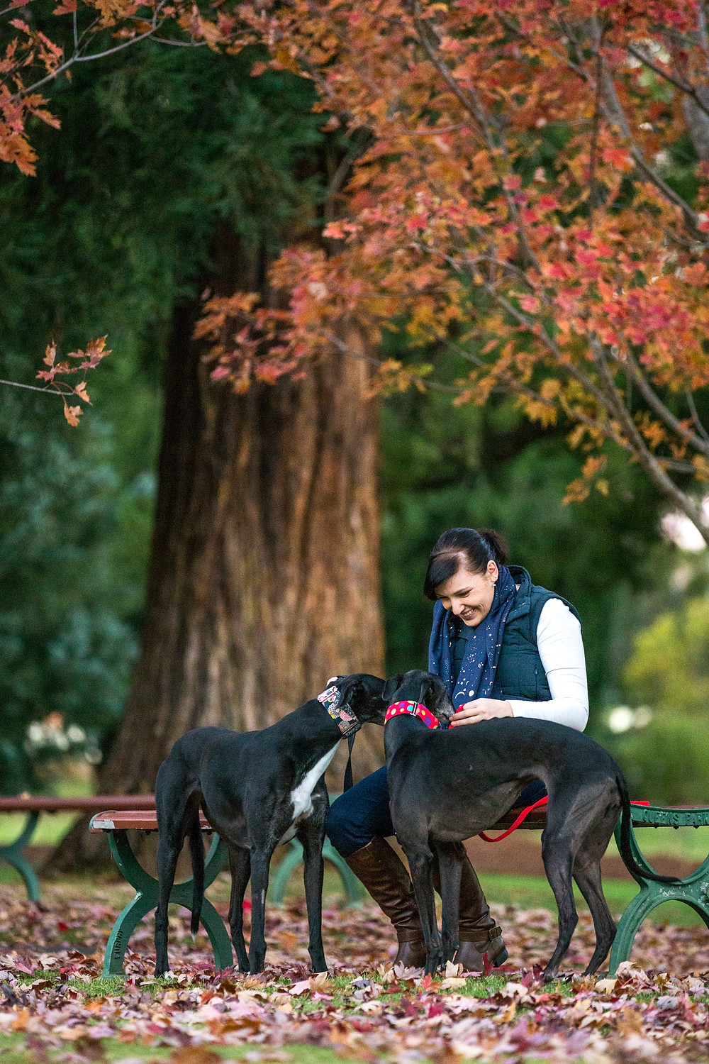 two greyhounds and their owner among the autumn leaves in queens park
