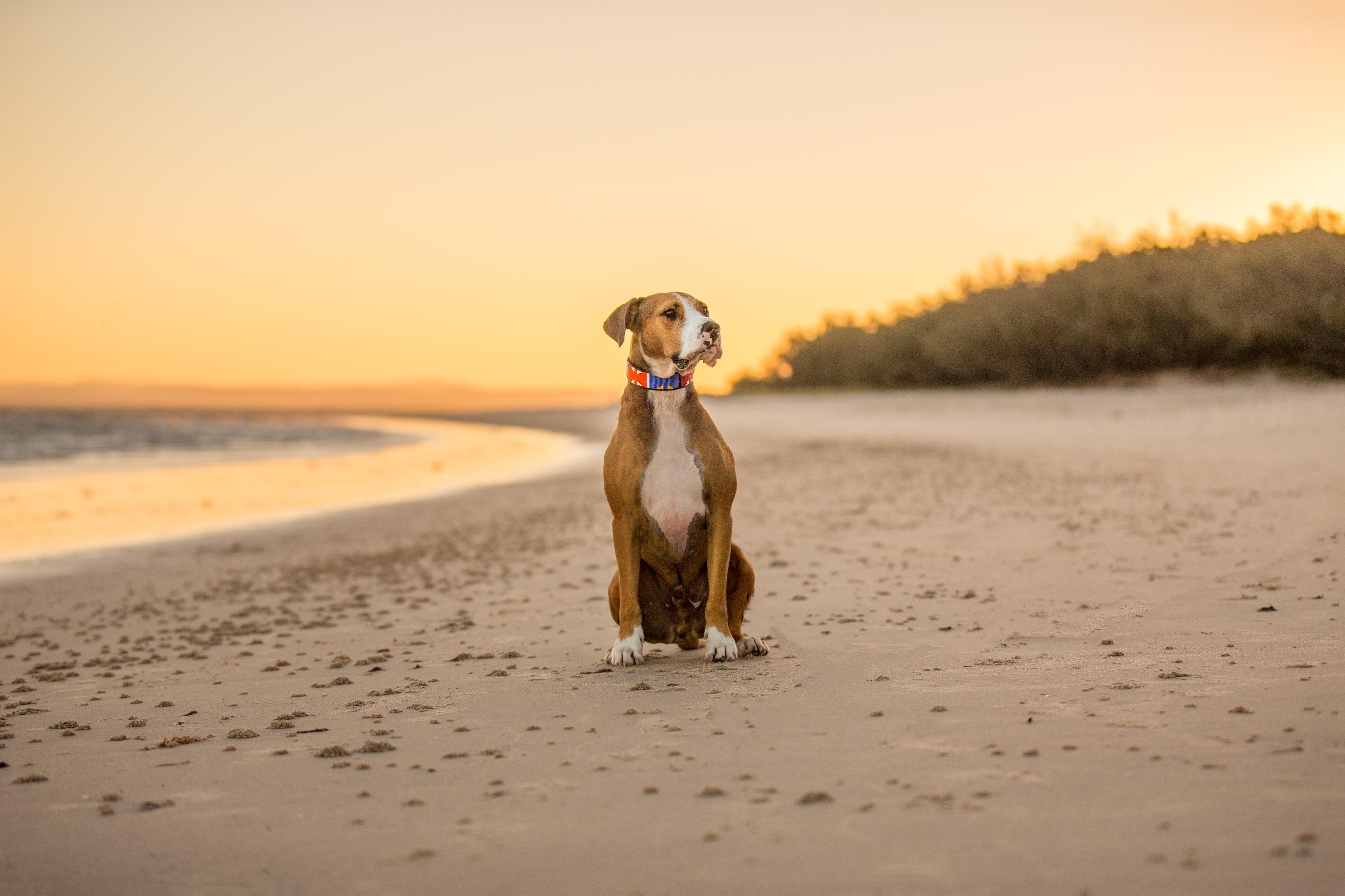 bribie island pet photography