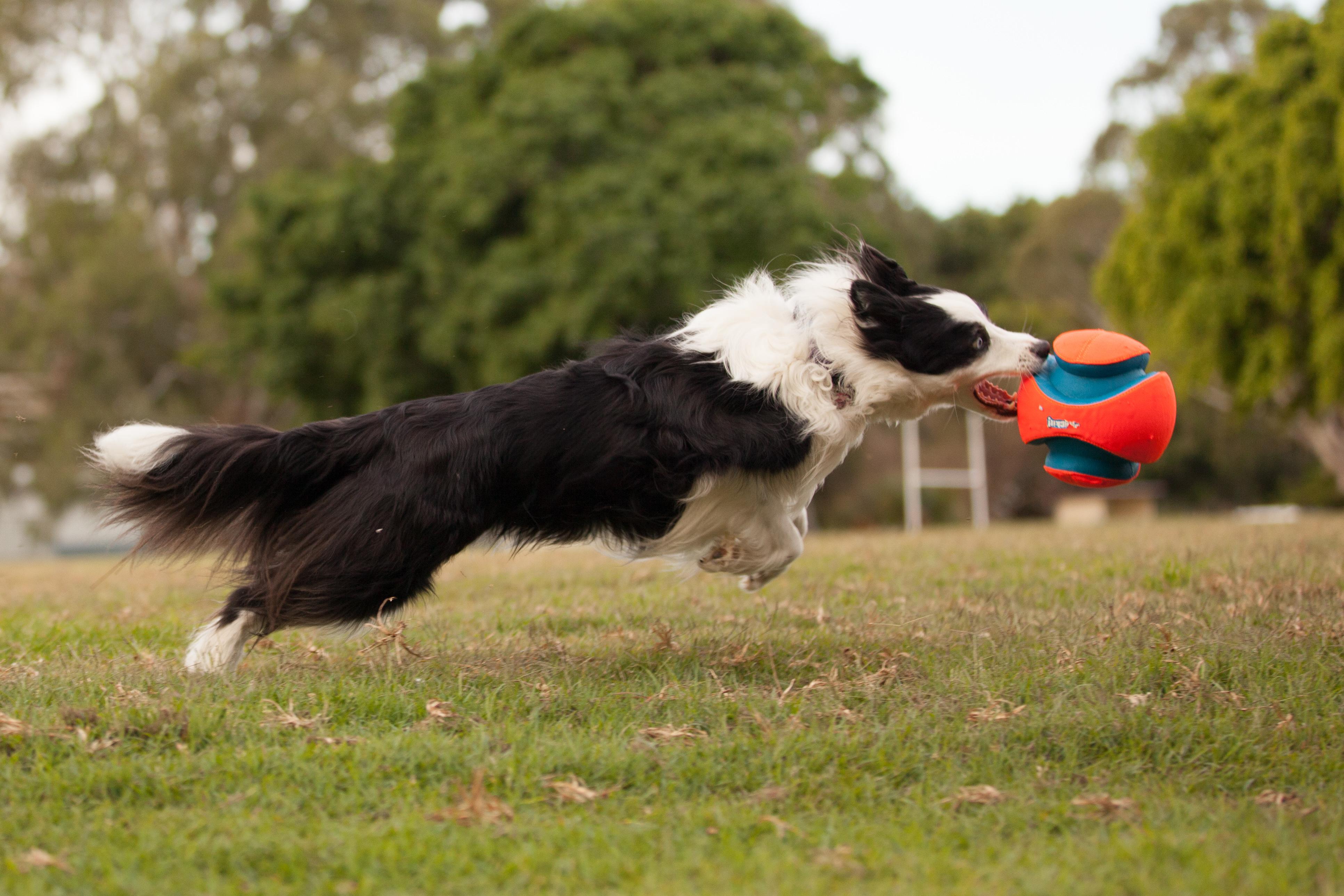 action photos gold coast pet