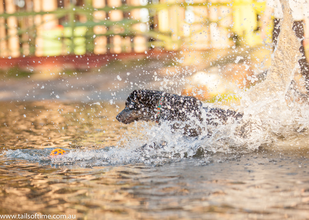 pizzey park dog photography