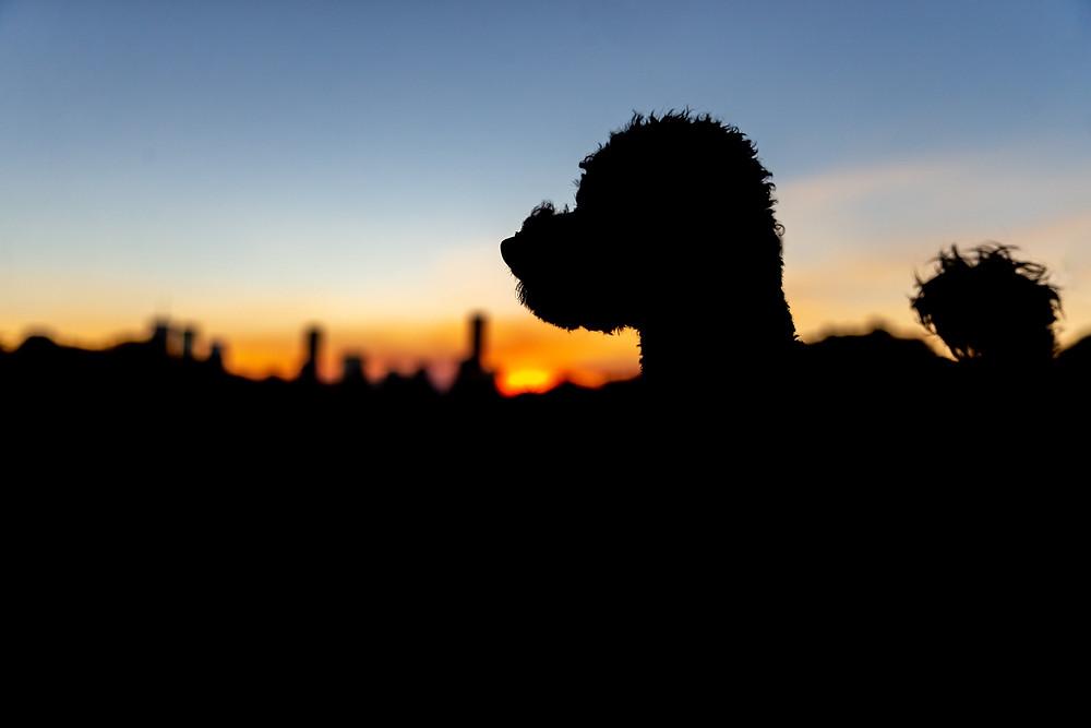 New farm park dog photography silhouette