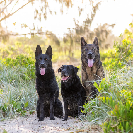 Bree, Duke and Abby