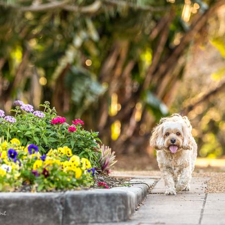 Benny explores New Farm Park