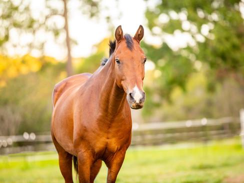 horses-830.jpg