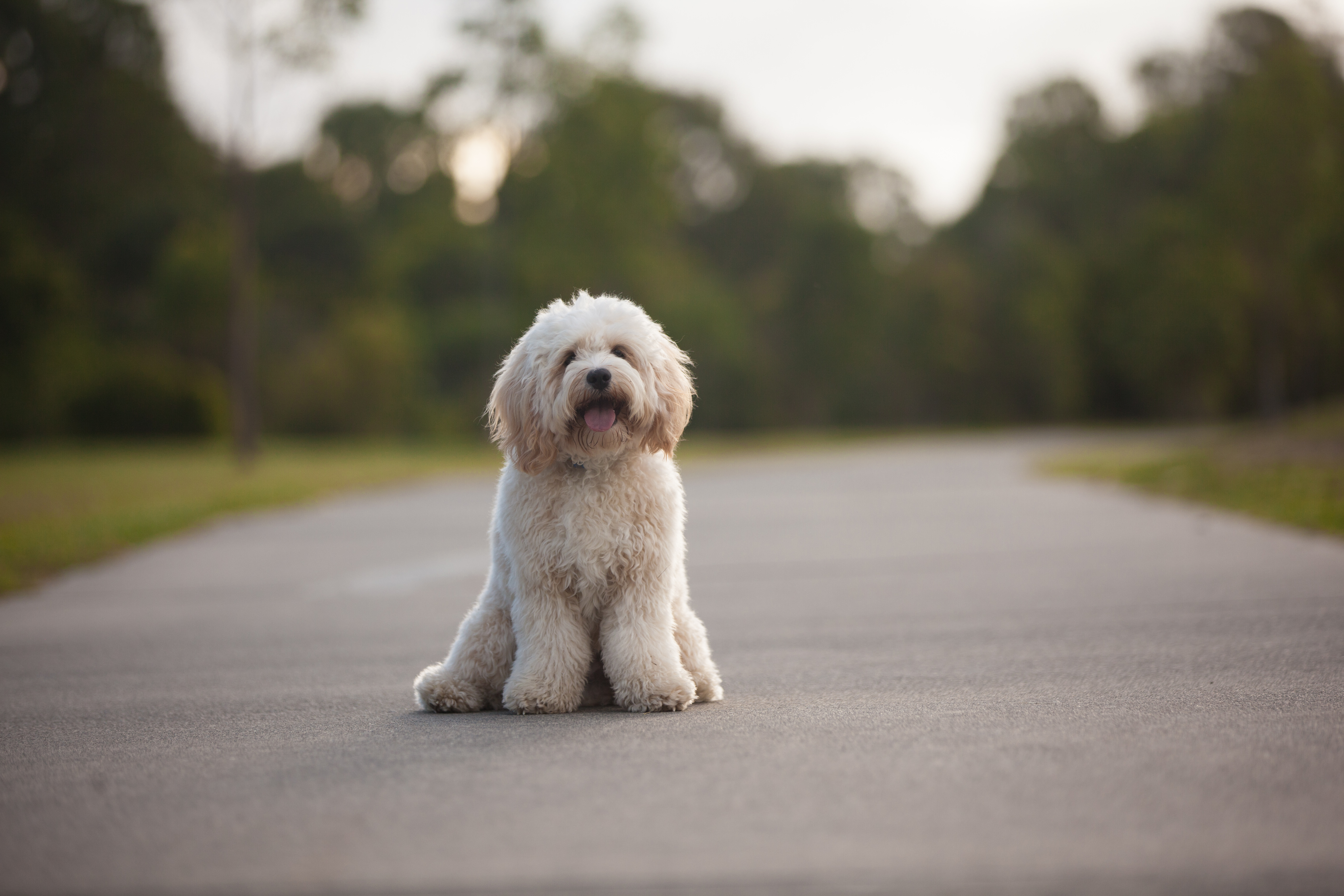 chermside pet photoshoot