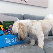 Commercial Pet Photography in Brisbane