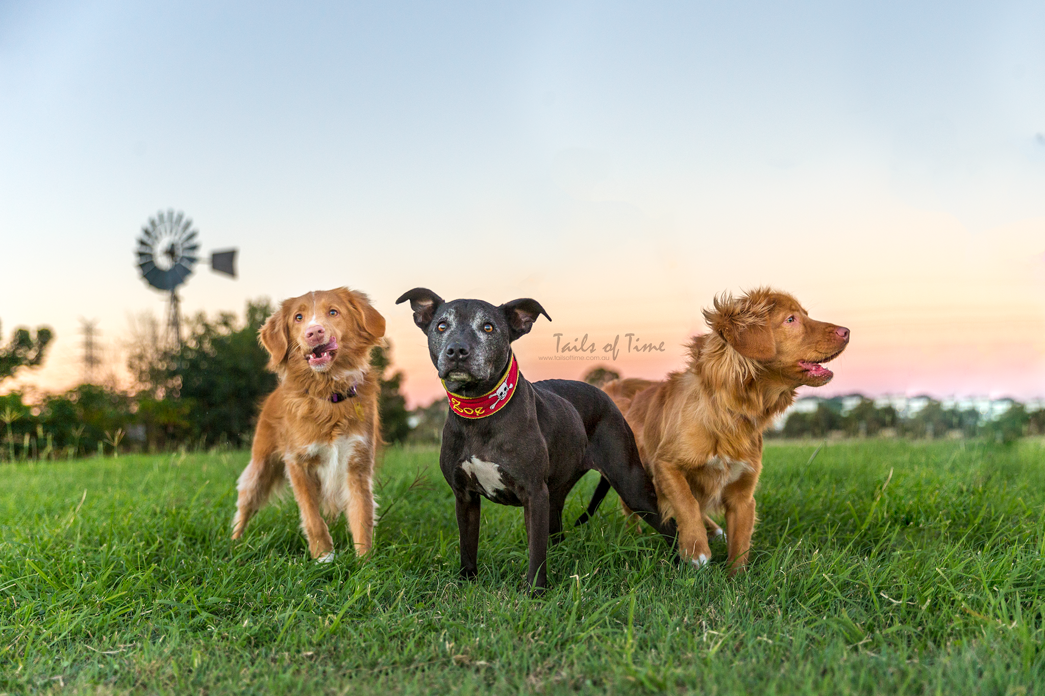 dog and family photography