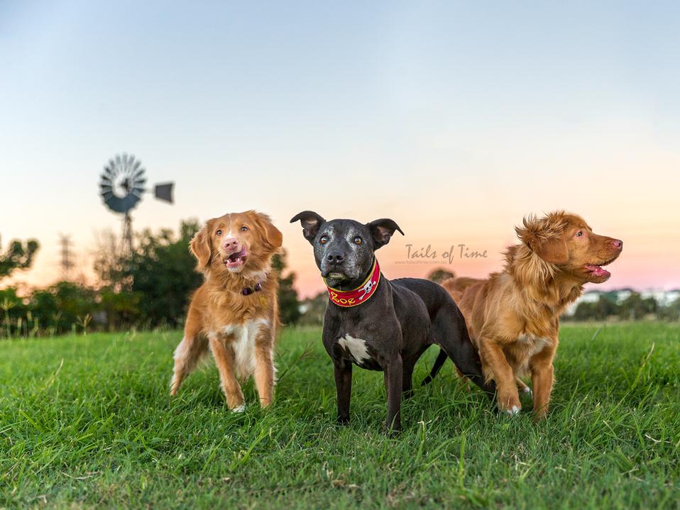 Rosie, Zoe and Nitro