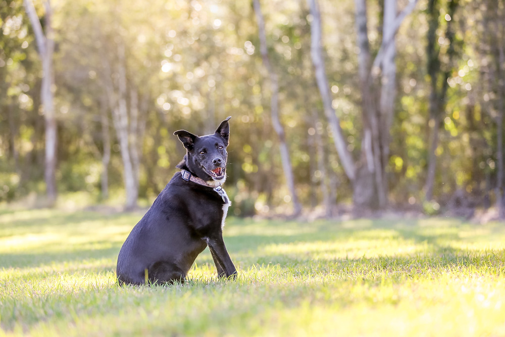 a black dog during her pet photography session