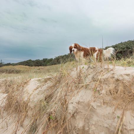 The Photographers Dog