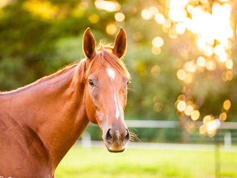 horses-815.jpg