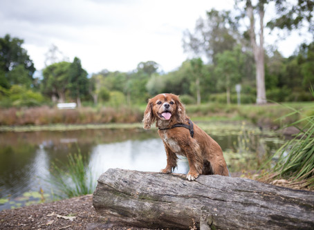 Brisbane's Best Places to take your Dog Swimming!