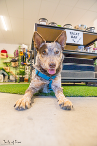 Gus from wholefood pet market