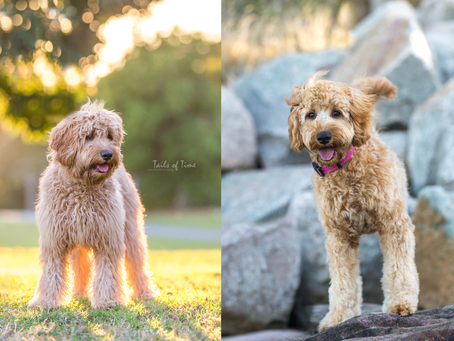 5 Things to Prepare Before your Pets Photoshoot with Tails of Time