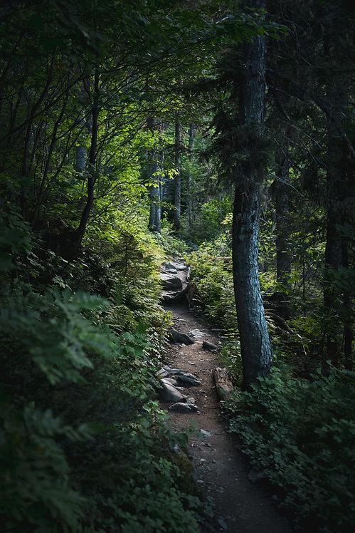 Forêt de la Gaspésie