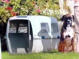 Перевозка собак в Улан-Удэ