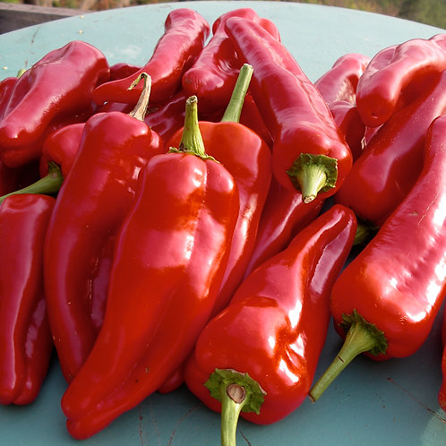 Red Sweet Pointed Peppers each