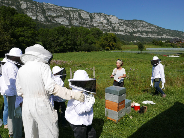 Ouverture ruche.JPG